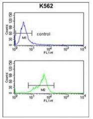 AP51873PU-N - G protein alpha 0