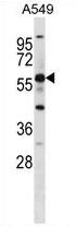 AP51920PU-N - GPR153 / PGR1