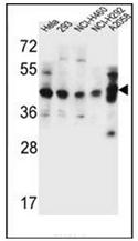 AP51972PU-N - GTF2H2C