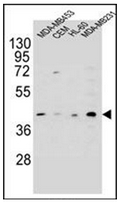 AP52042PU-N - HHLA2