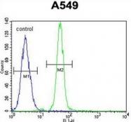 AP52064PU-N - Heme oxygenase 1 / HMOX1