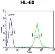 AP52075PU-N - HOXA3 / HOX1E