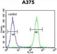 AP52077PU-N - HOXA9 / HOX1G