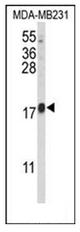 AP52100PU-N - CBY1