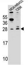 AP52152PU-N - G1P3 / IFI6