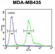 AP52184PU-N - IL12RB2