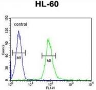 AP52197PU-N - CD132 / IL2RG