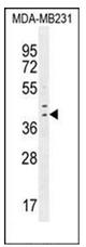 AP52234PU-N - IRF1