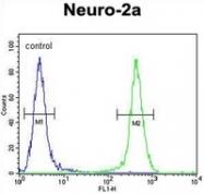 AP52274PU-N - Josephin-2