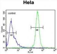 AP52287PU-N - Cytokeratin 78 / KRT78