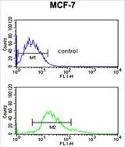 AP52410PU-N - Cytokeratin 1