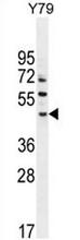 AP52436PU-N - LACE1