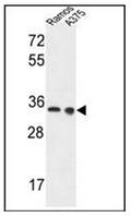 AP52459PU-N - LDHA