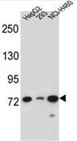 AP52511PU-N - LNX2