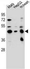 AP52530PU-N - LRRC28