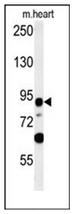 AP52533PU-N - LRRC36