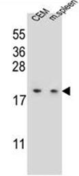 AP52555PU-N - LSM7