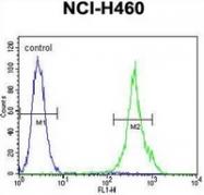 AP52591PU-N - Mastermind-Like Protein 1