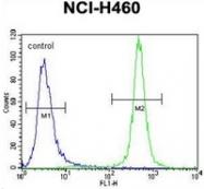 AP52761PU-N - Macrophage stimulatory protein