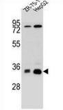AP52766PU-N - MTHFD2L