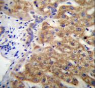 AP52773PU-N - Mucin-15