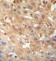 AP52856PU-N - Sialidase-4