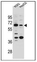 AP52873PU-N - NHEDC1