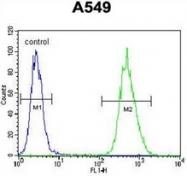 AP52881PU-N - BNIP3L / BNIP3A