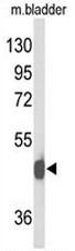 AP52925PU-N - NPY receptor 2 / NPY2R