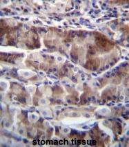 AP52939PU-N - Neurensin 2