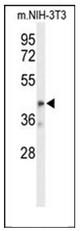 AP52996PU-N - OLFML3
