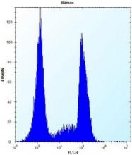 AP53006PU-N - Olfactory receptor 10G9