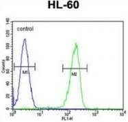 AP53029PU-N - Olfactory receptor 2F2