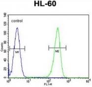 AP53043PU-N - Olfactory receptor 2W3