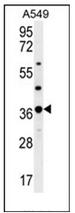 AP53063PU-N - OR4M1