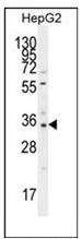 AP53078PU-N - OR52I2
