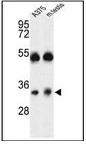AP53115PU-N - ORAI1