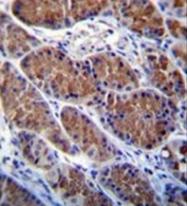 AP53128PU-N - Otopetrin-1