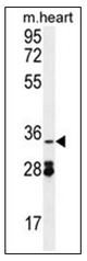 AP53140PU-N - OXNAD1