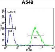 AP53156PU-N - PALM3 / Paralemmin-3