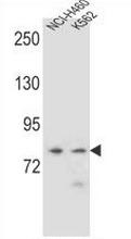 AP53203PU-N - PCDHA9