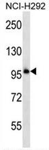 AP53206PU-N - PCDHB11