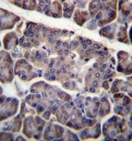 AP53228PU-N - CD273 / PDL2