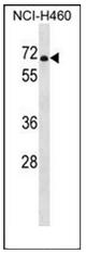AP53234PU-N - PDE1B