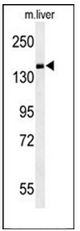 AP53238PU-N - PDE6C