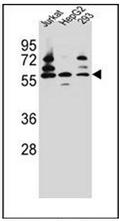 AP53246PU-N - PDP1