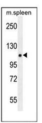 AP53256PU-N - PELP1
