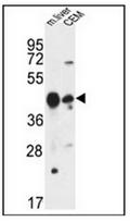 AP53321PU-N - PLA1A