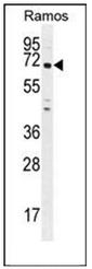 AP53365PU-N - PNLDC1