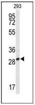 AP53372PU-N - PNPO